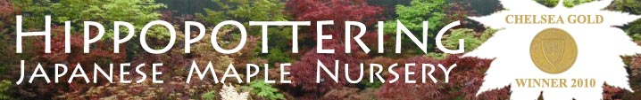 Hippopottering Nursery, Japanese Maples Online